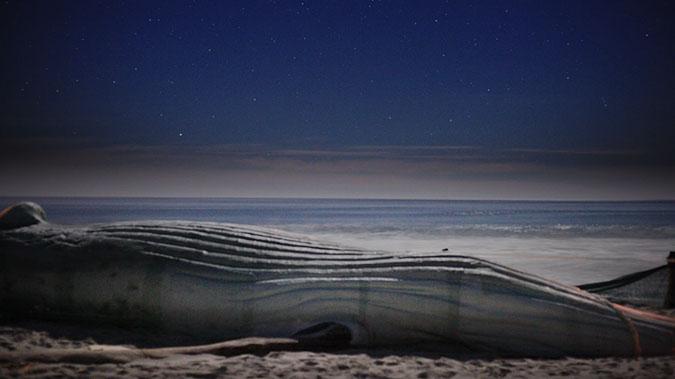Cast Whale Project
